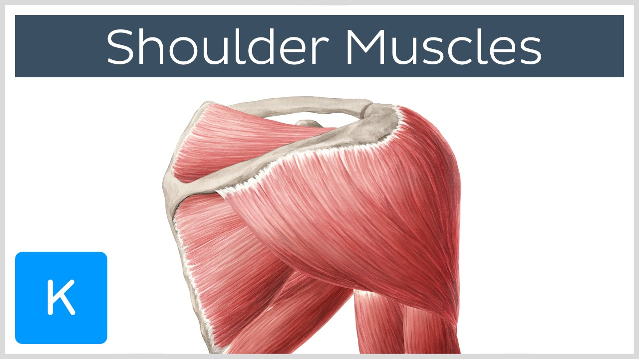 Better Shoulder Health With 3 Mobility Routines For Impingement Problems