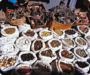 Amazing herbal cures from around the world
