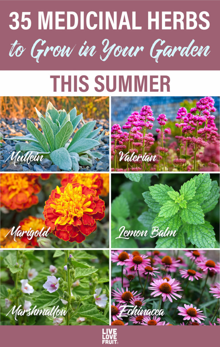 35 Medicinal Herbs to Grow in Your Garden This Summer